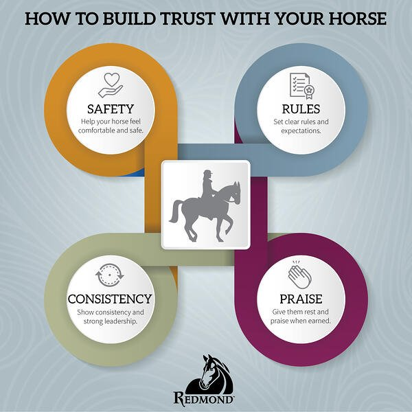 Build trust with your horse