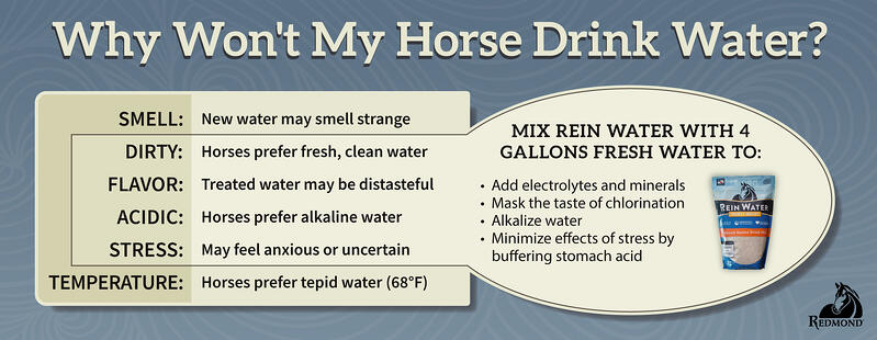 Why wont my horse drink - Rein Water-1