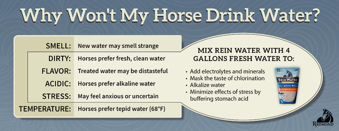 Why wont my horse drink - Rein Water