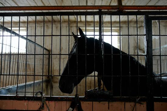 horse in stall 2