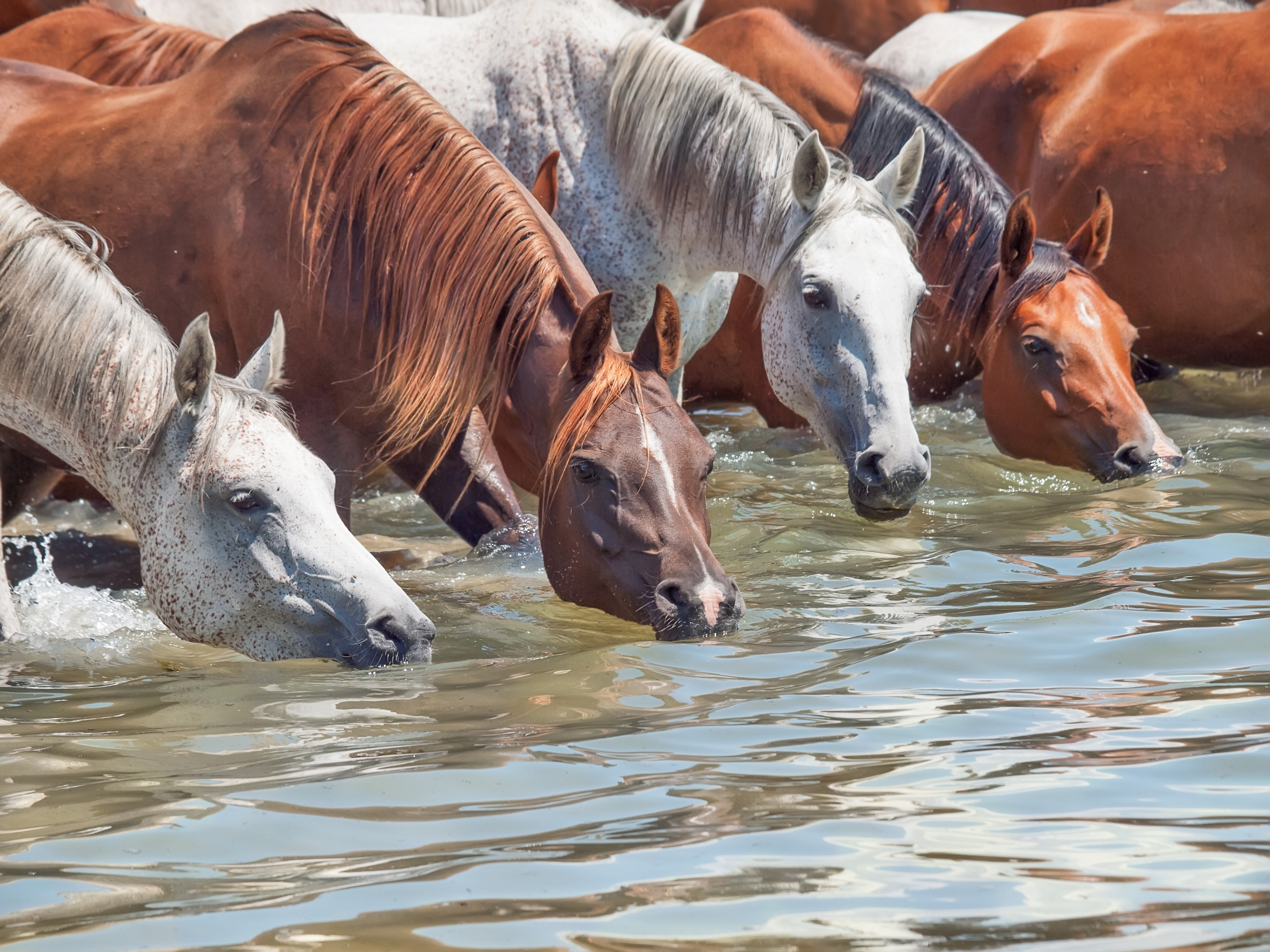 A Redmond Story: How Jo Got Her Dehydrated Horse Drinking Again