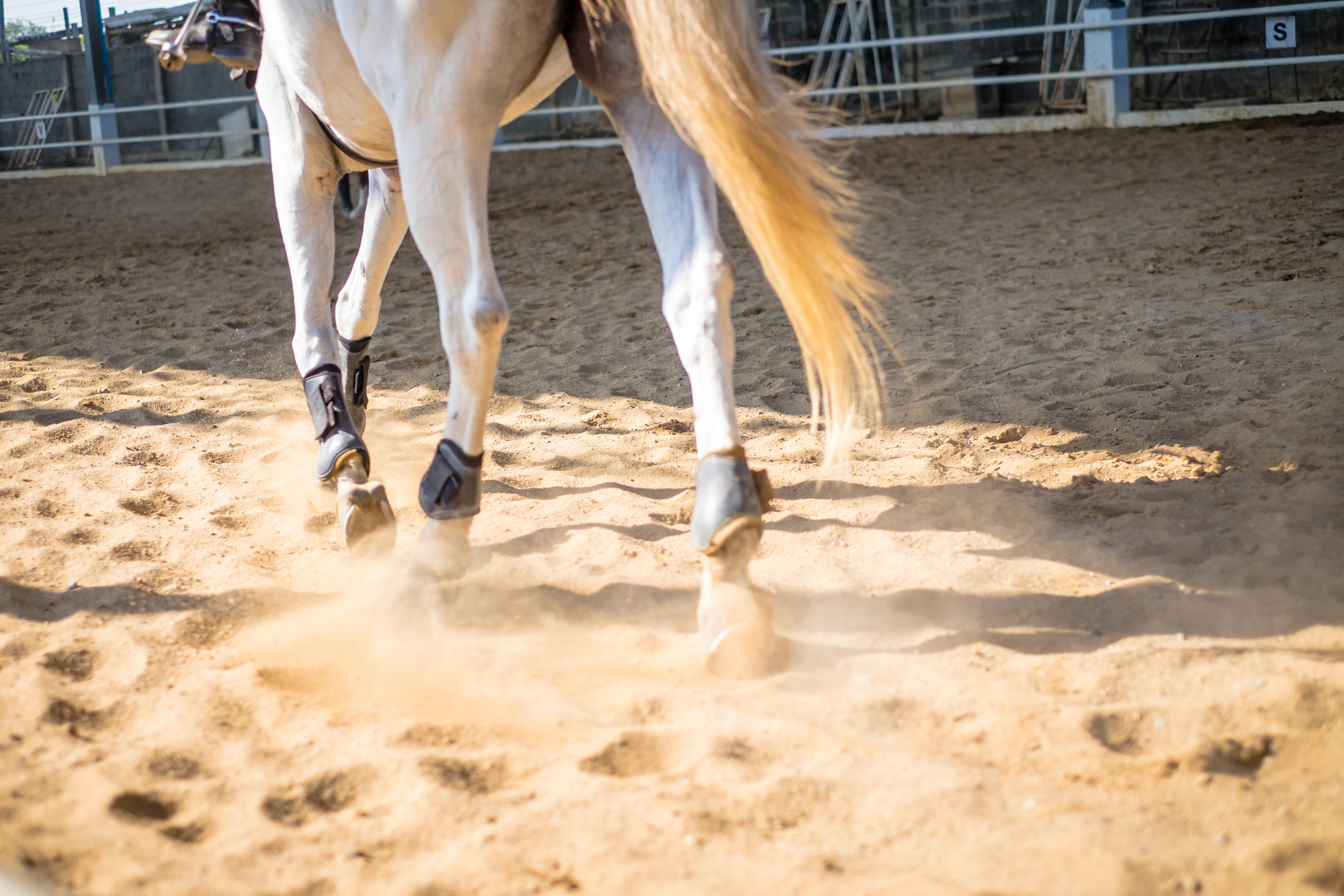 A Redmond Story: A Poultice for Horse Splints and Stocking Up