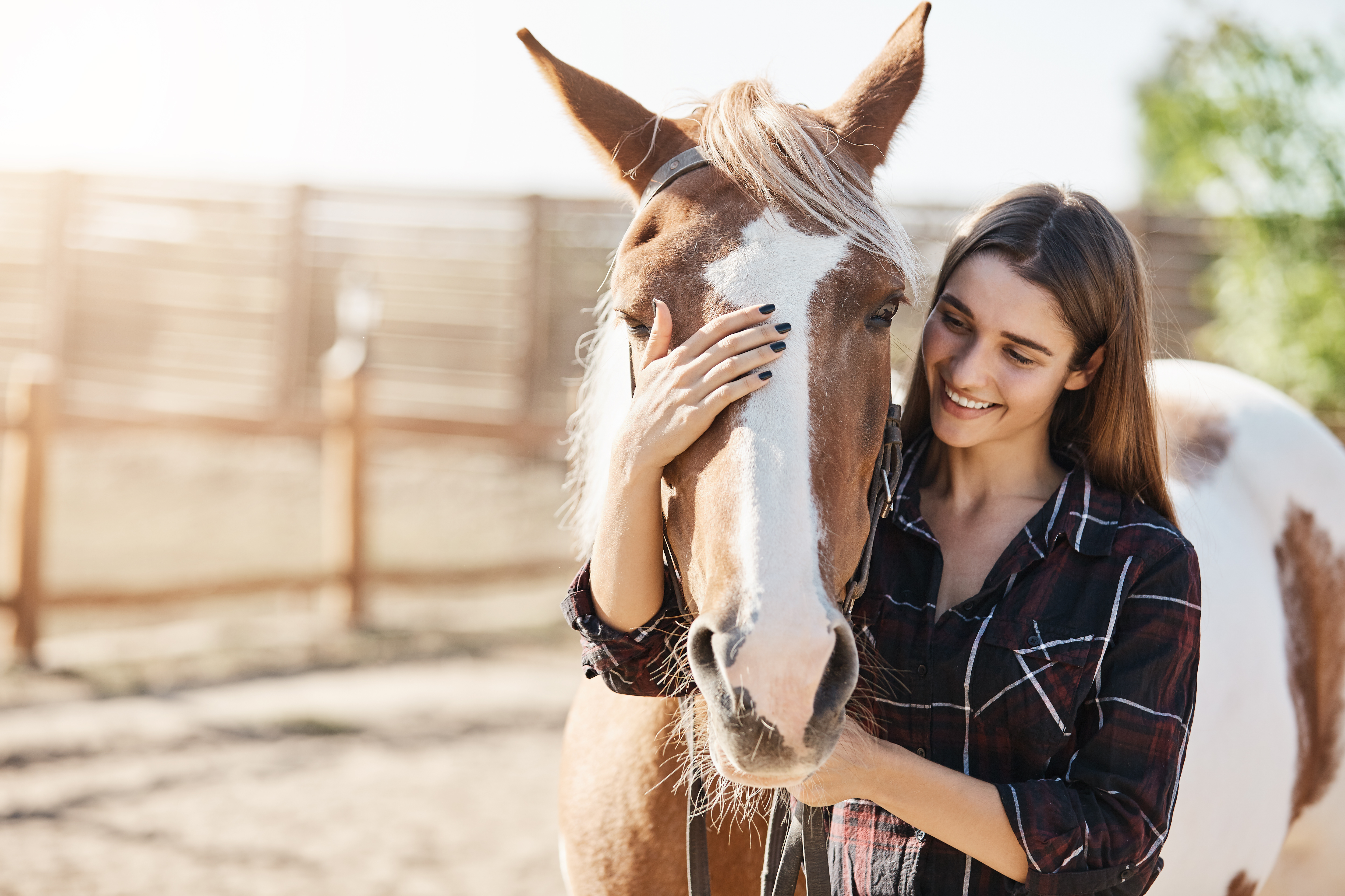 Horse and Rider: Does Your HorseTrust You?