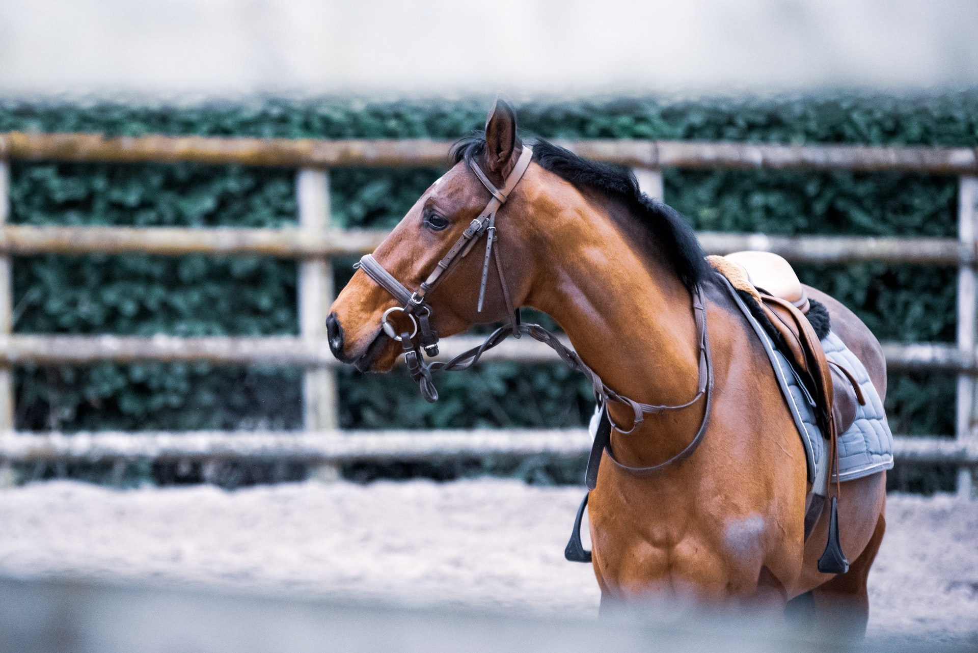 A Redmond Story: How Daily Gold Settled Paige's Stressed Horse