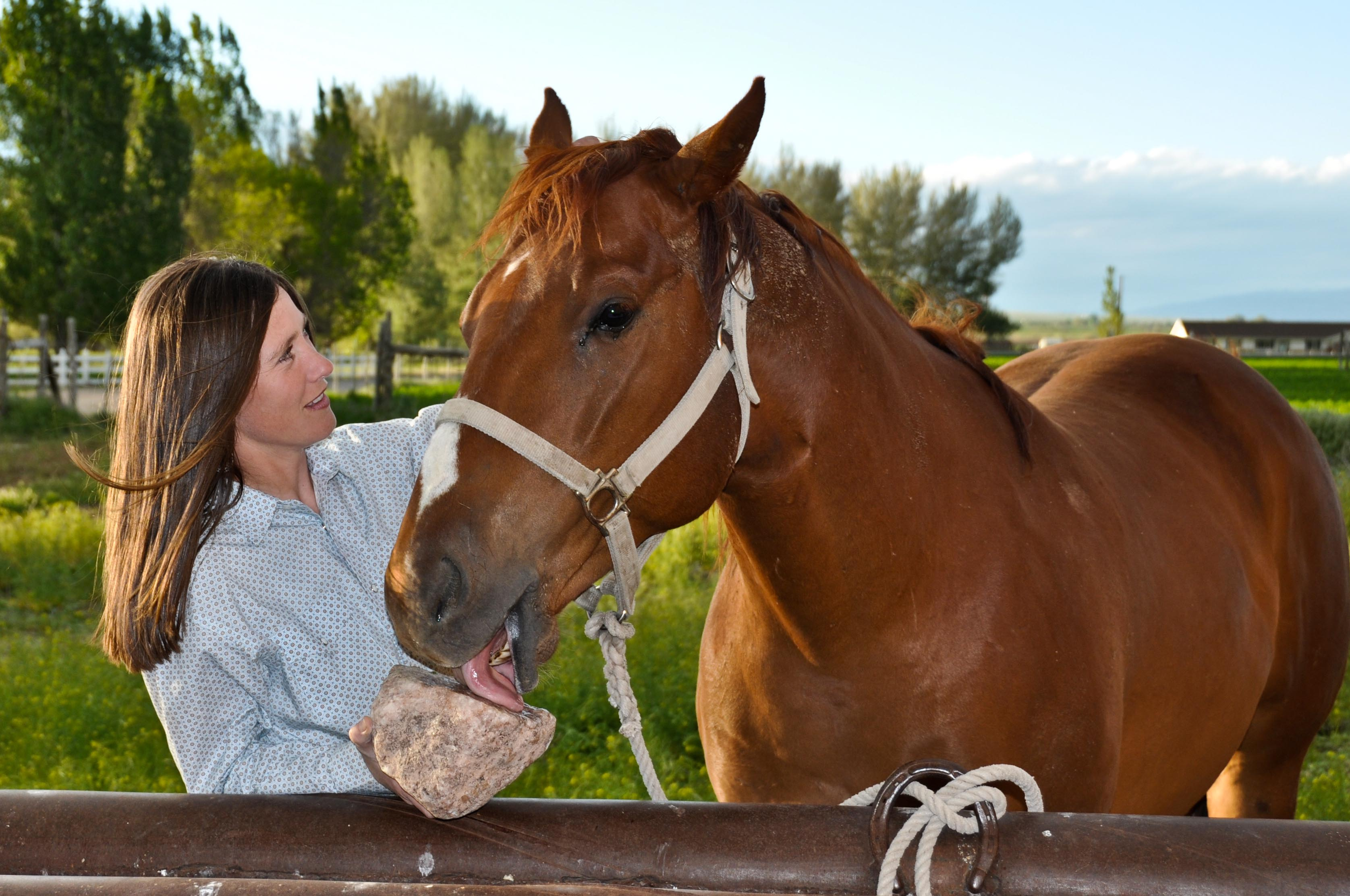 A Redmond Story: Janet's Show Horses Get the Trace Minerals They Need With Redmond Rock