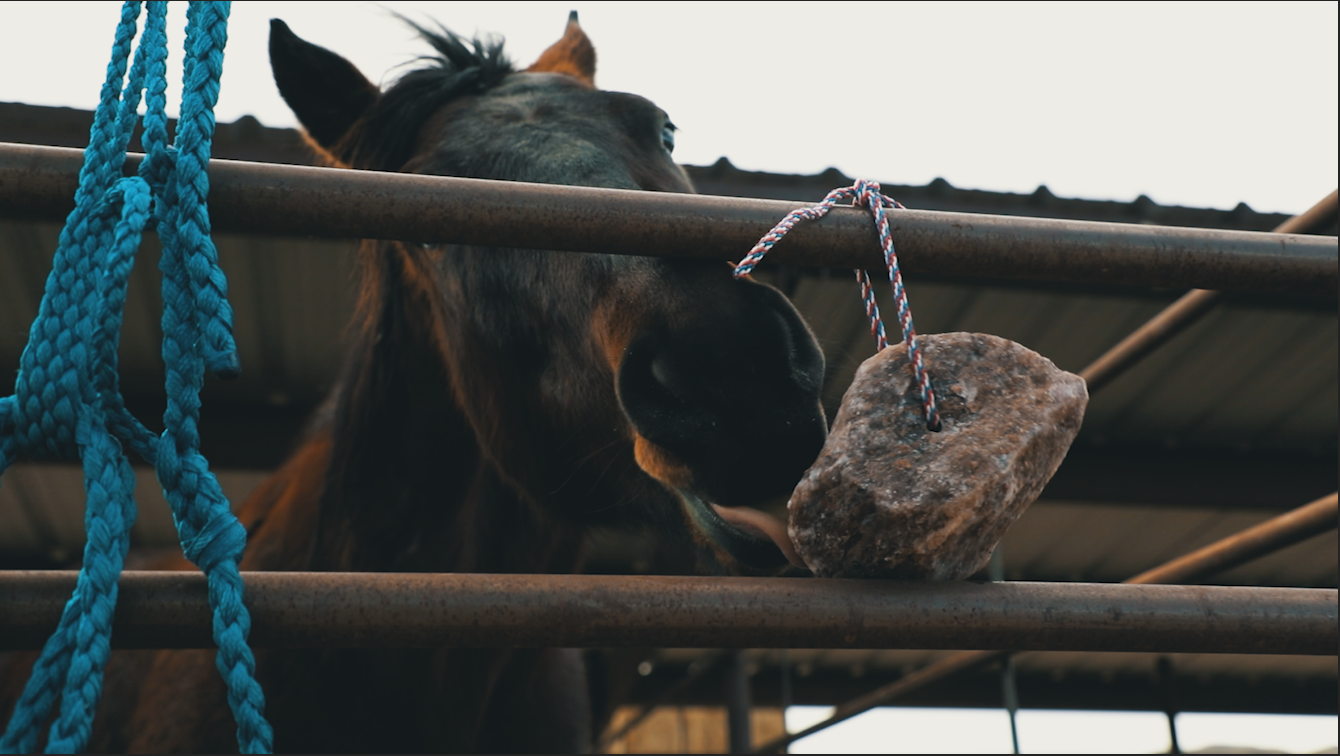 A Redmond Story: Kelly Uses Rock on a Rope to Give Her Horse Salt and Trace Minerals