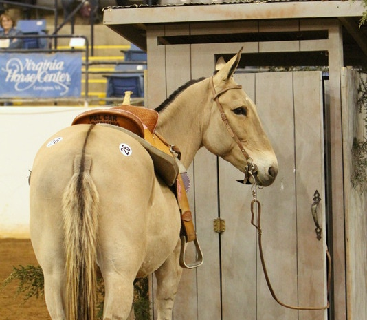A Vet's View: 6 Causes of Loose Manure in Horses