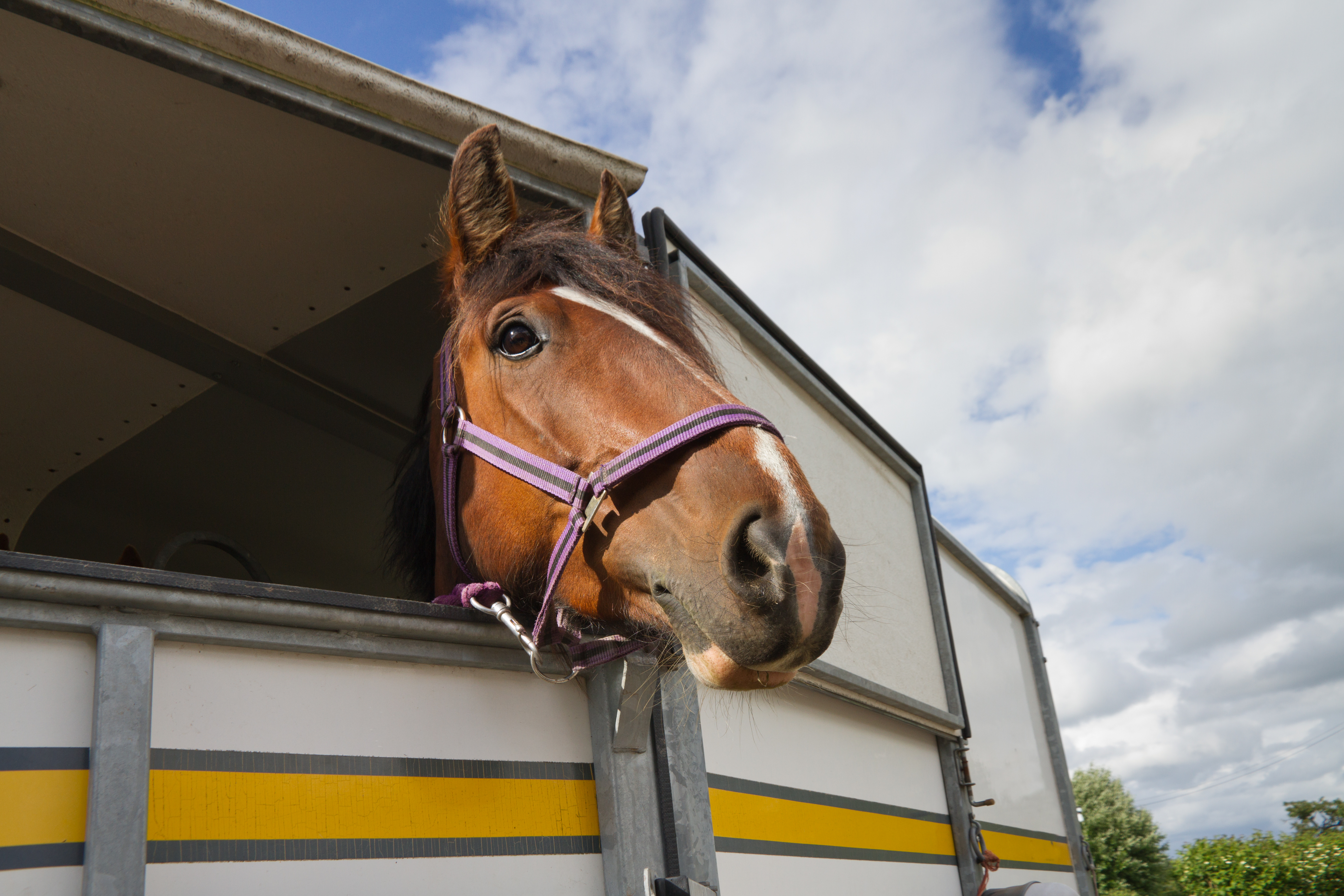 Why Won't My Horse Drink When Hauling or Away From Home?