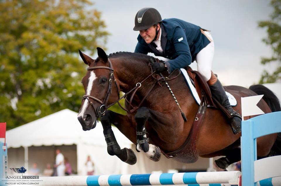 G&G Sporthorses Saved a Show Jumper with Redmond Daily Gold