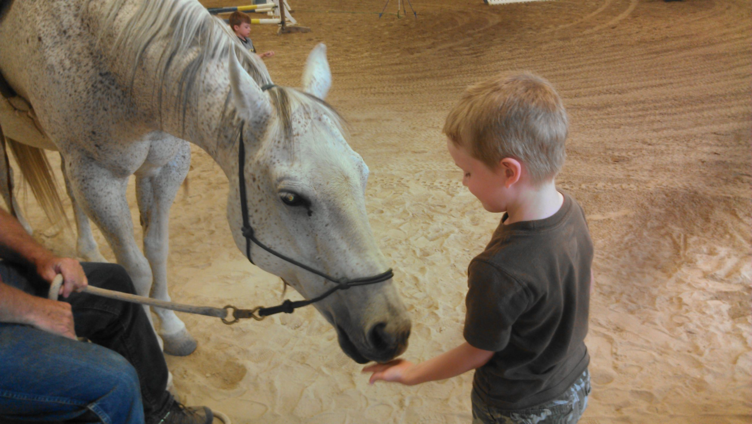 God Made a Horse – For Us
