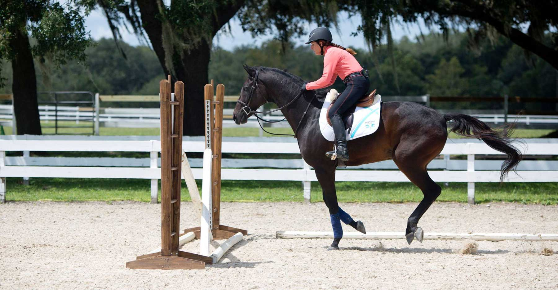 Gaining Your Horse's Trust — and  3 Ways You Could Lose It