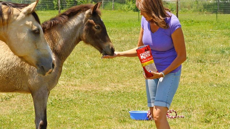 For Your Horse's Sake: Salt Needs More Attention During Hot Months