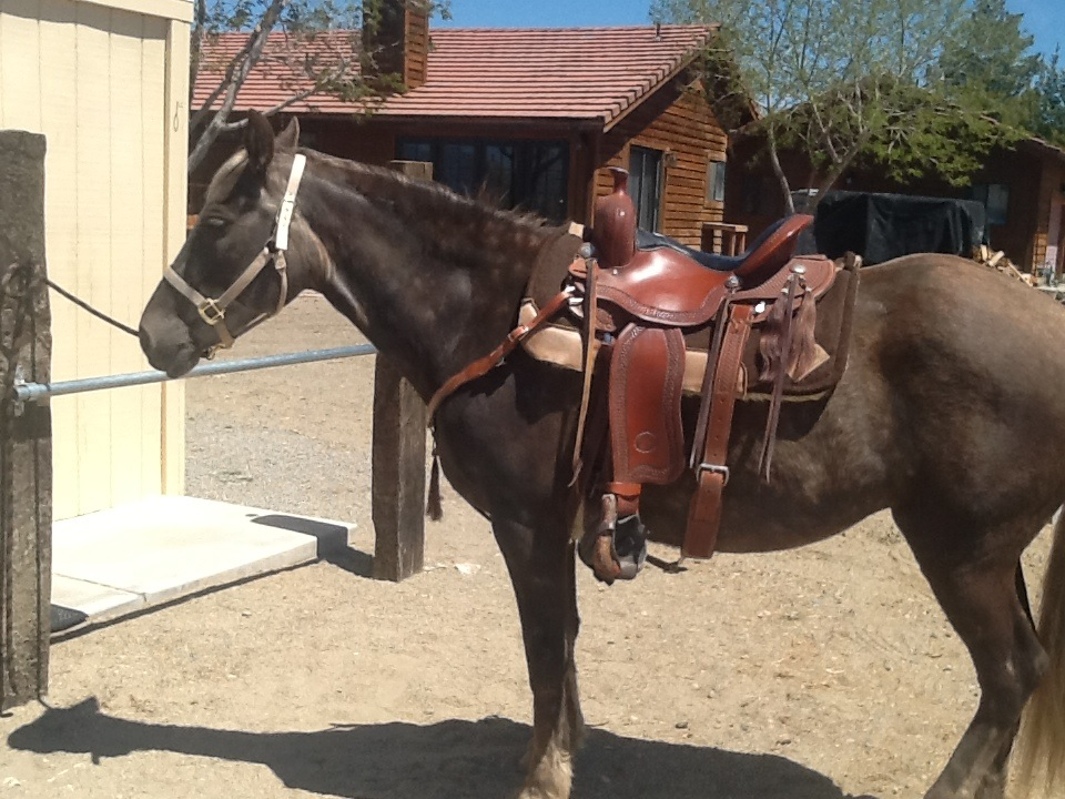 Get Your Horse Back – Sienna's Story