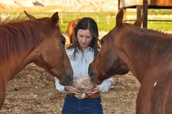 4 Common Myths Regarding Dehydration in Horses