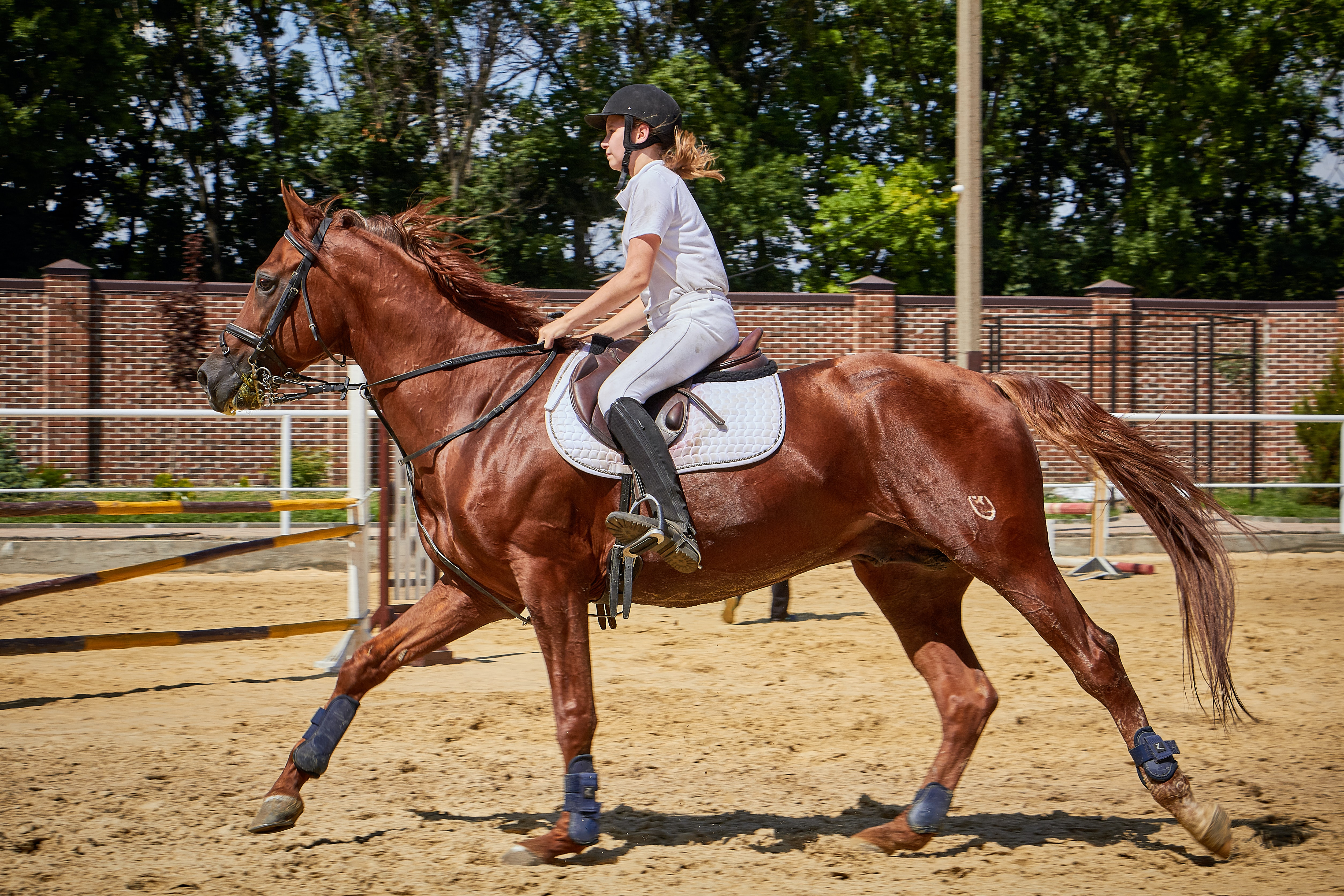 A Redmond Story: How Kate Got Her Stressed Horse to Calm Down and Focus