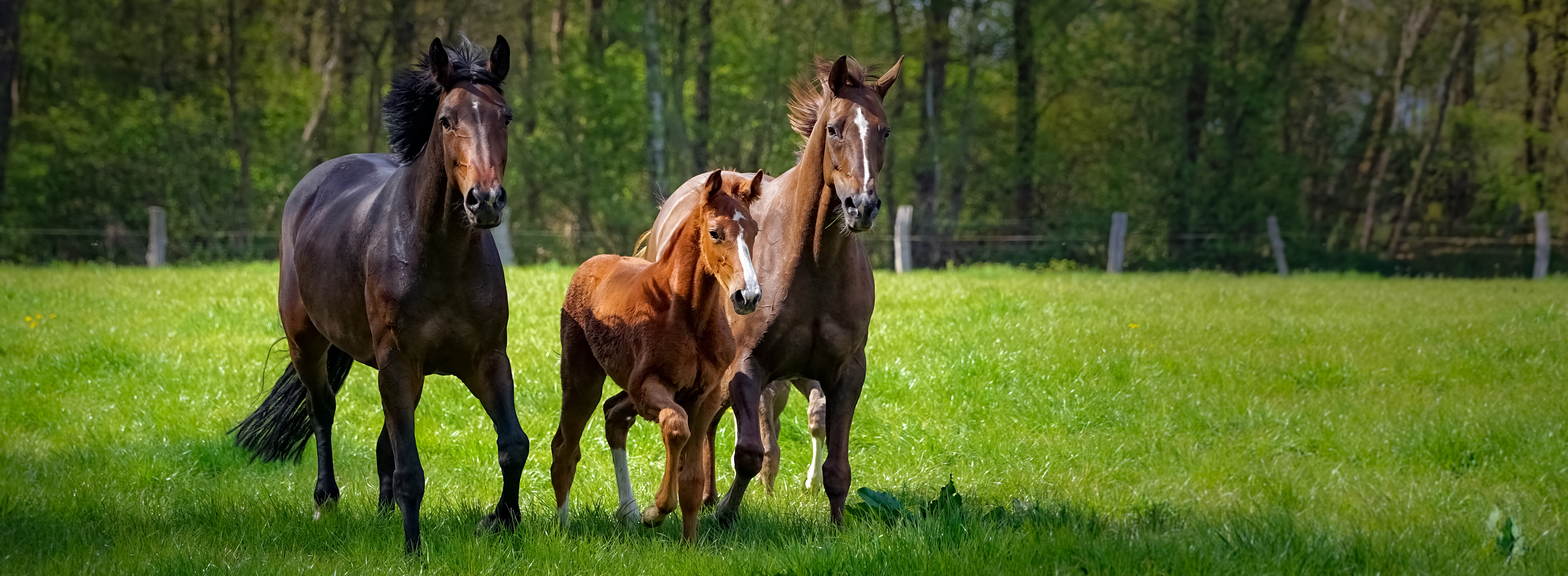 Redmond Daily Red: Fortified Loose Minerals For Horses
