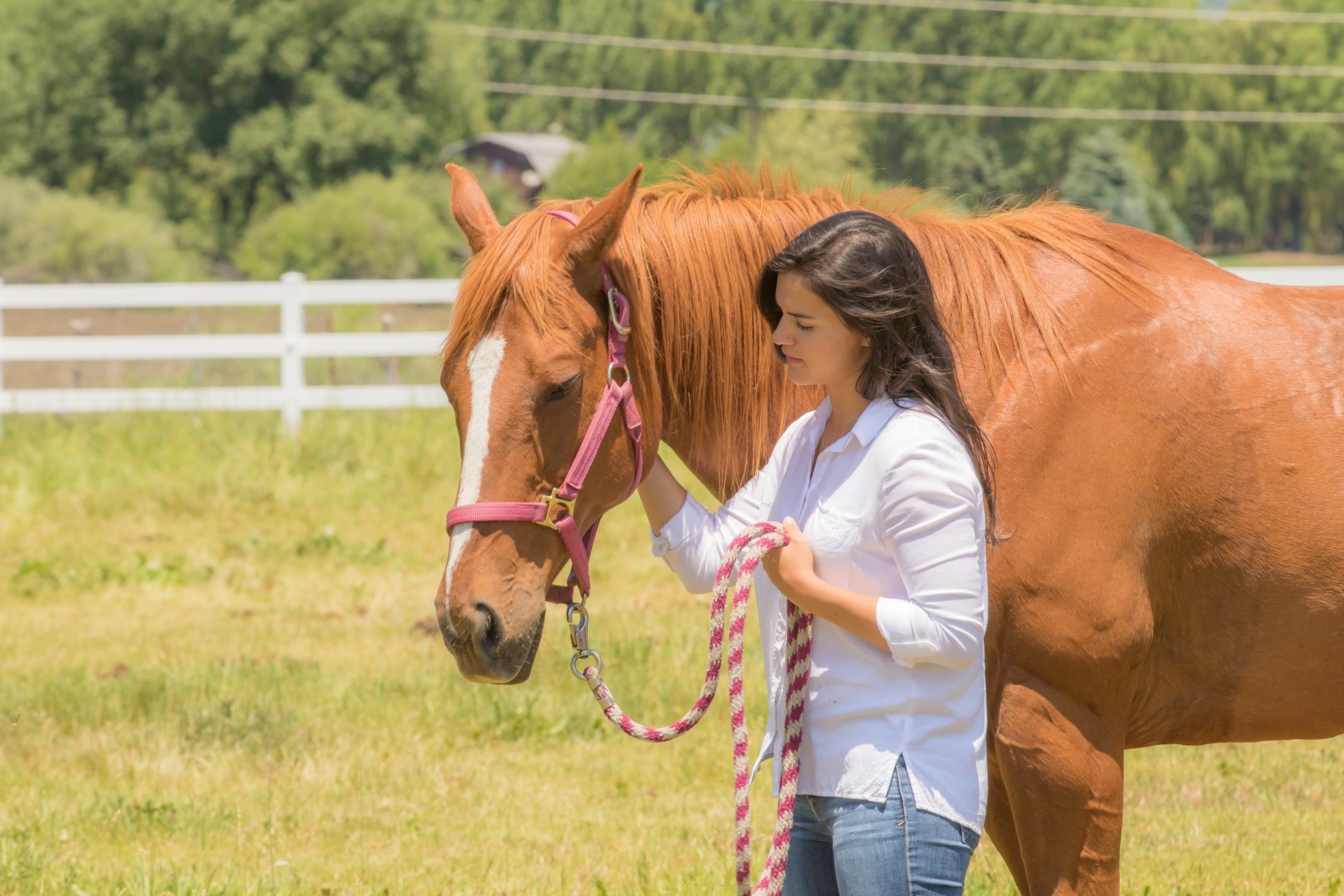 How to Calm Anxiety in Horses