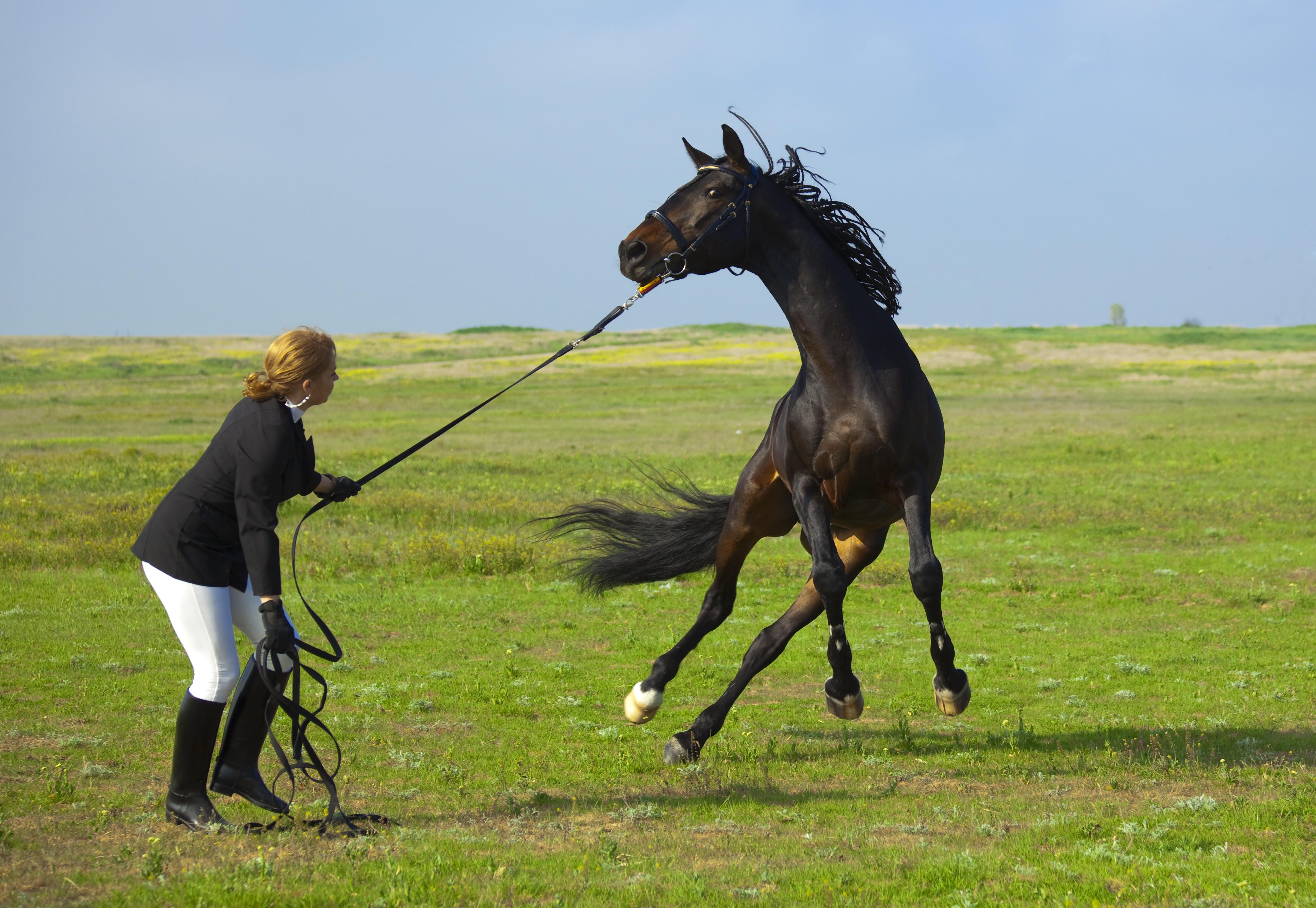 A Redmond Story: Daily Gold Supplement Made Demri's Horse Calmer