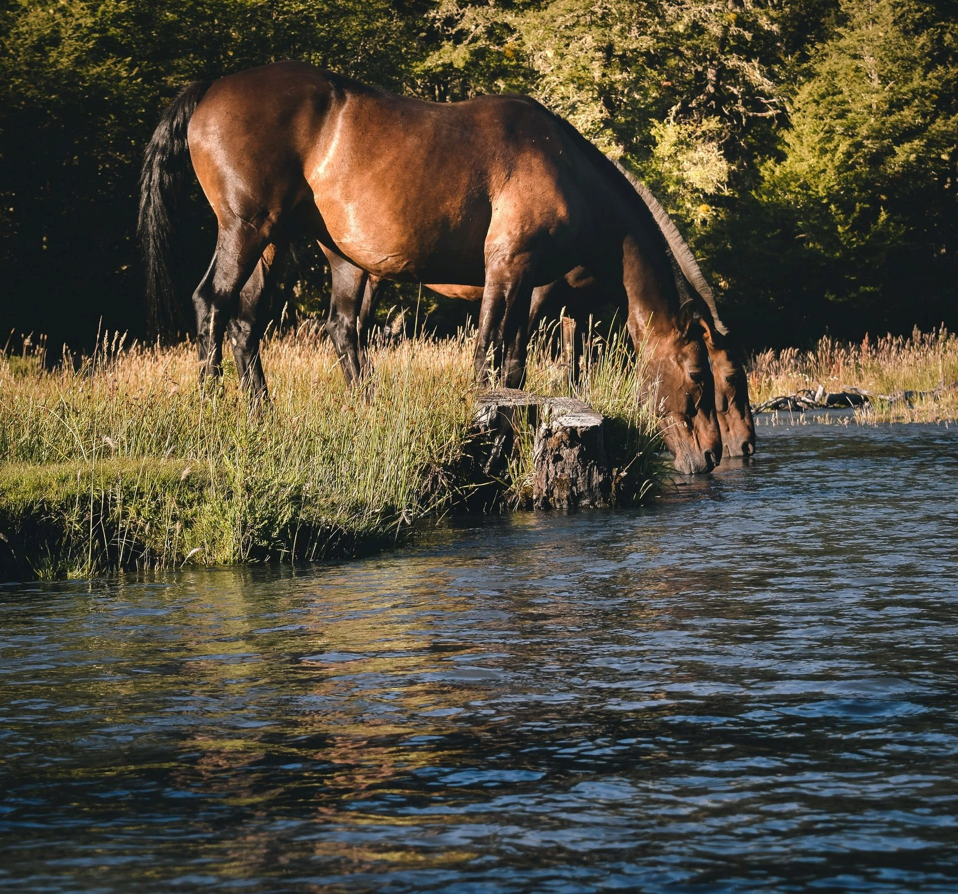 A Redmond Story: How Taylor Got Her Horse to Drink More Water