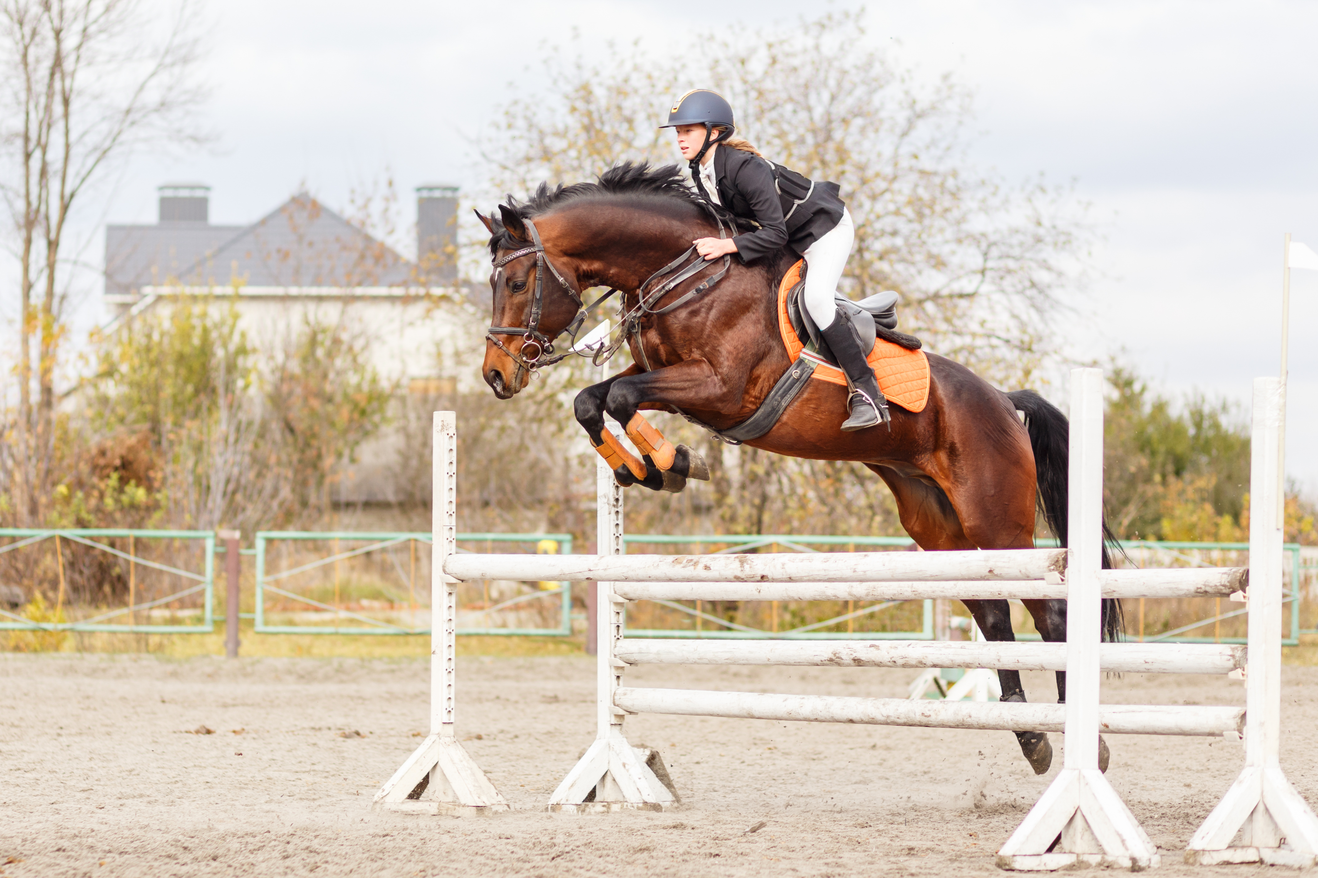 Salt vs. Electrolytes for Horses: What's the Difference?