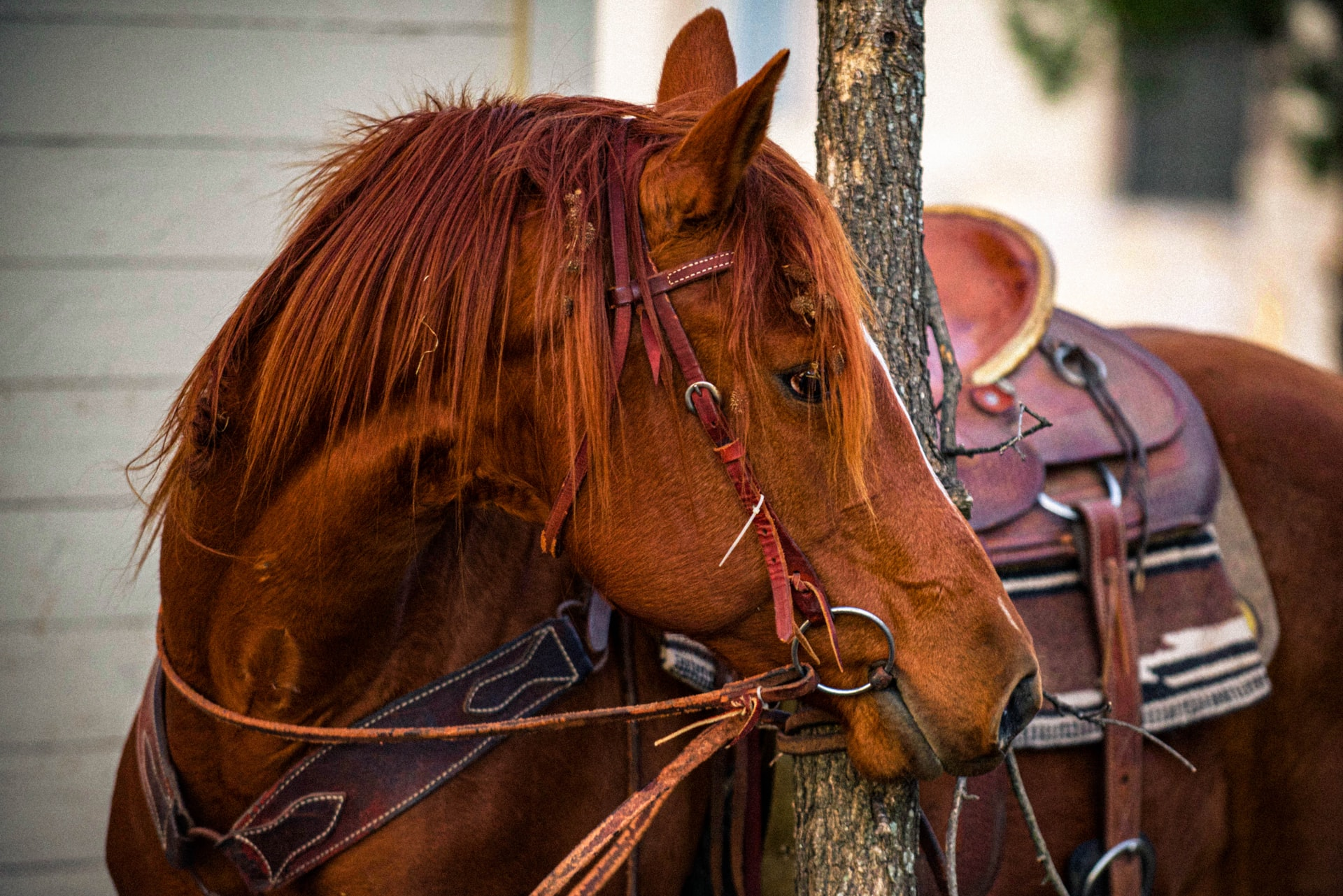 A Redmond Story: How Sami Solved Her Horse's Equine Ulcers