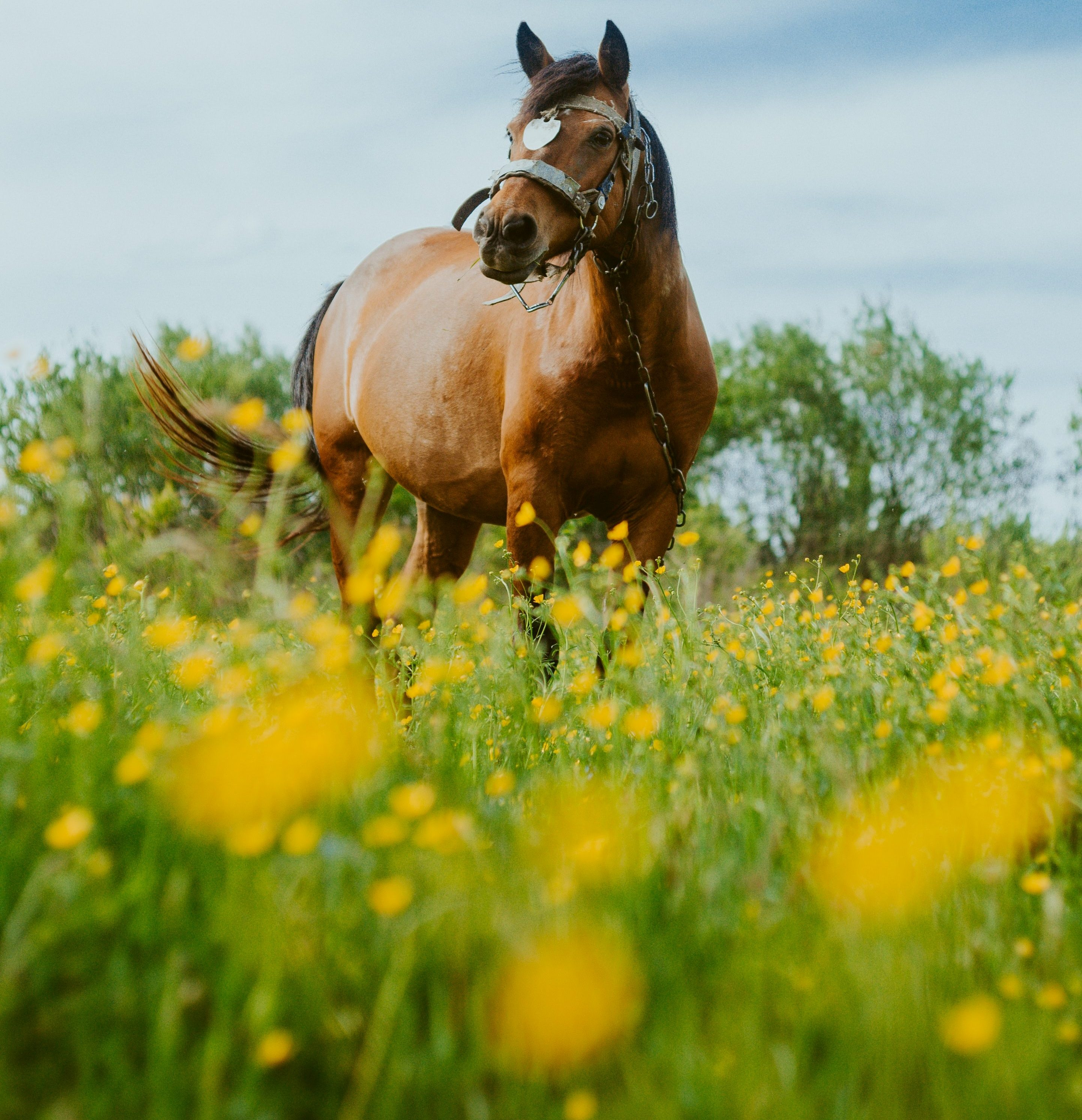A Personal Story About My Older Horse Dribbling Urine