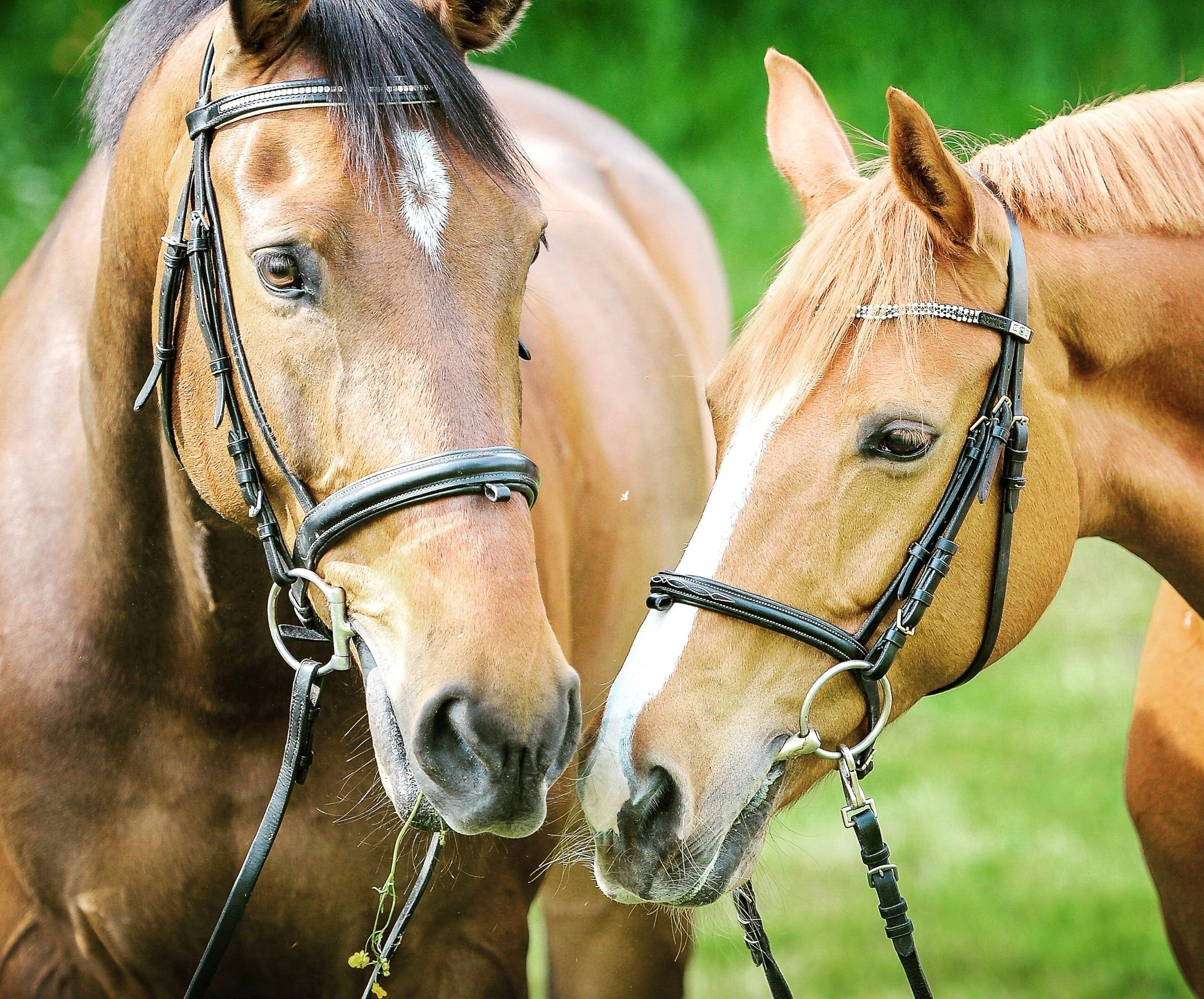 A Redmond Story: Mineral Brand of Choice for Red Hot Running Horses