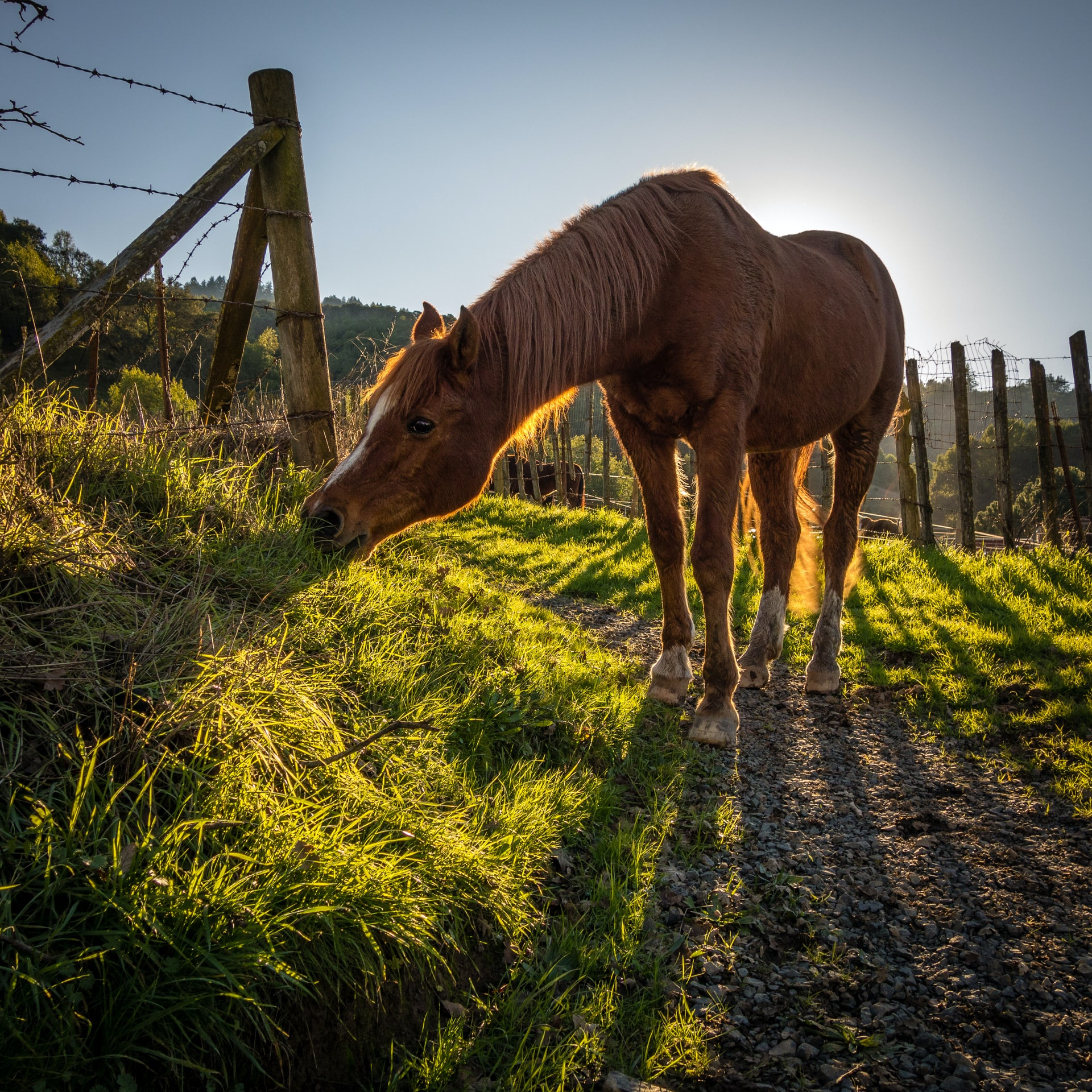 5 Reasons Horses Eat Dirt: And What You Should (or Shouldn't) Do About It
