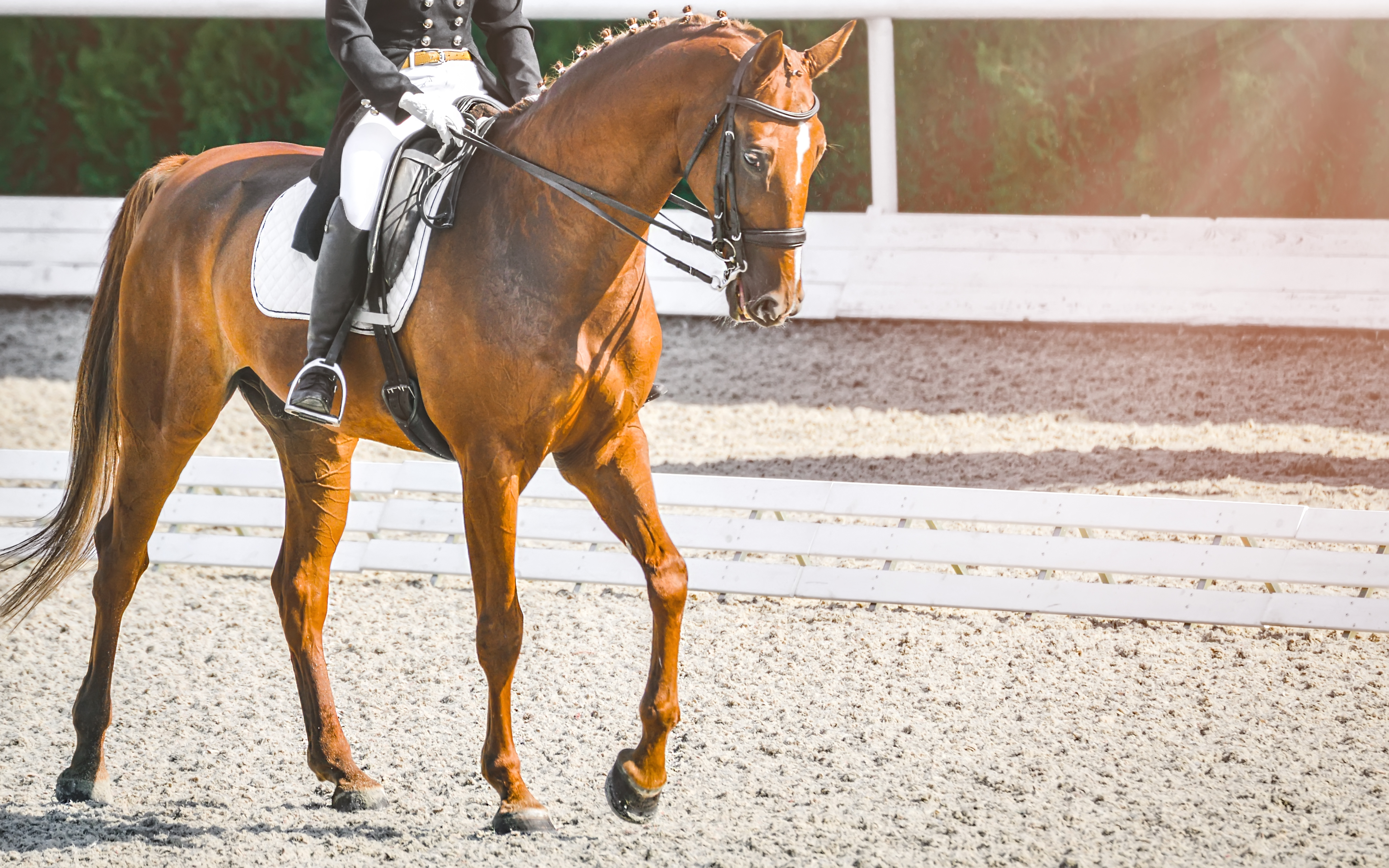 A Redmond Story: How Sarah Treated Equine Ulcers in Her Horse