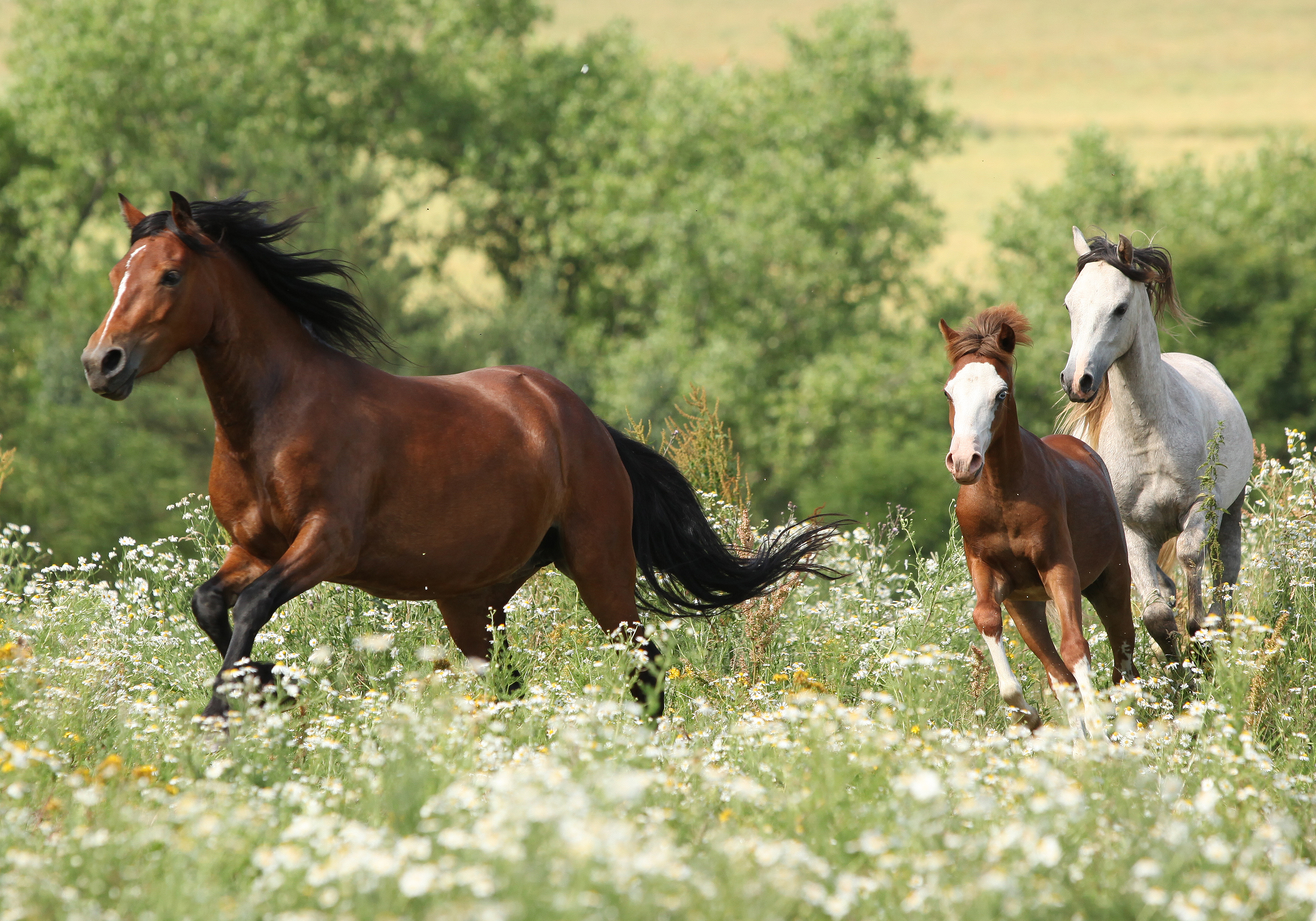 12 Important Vitamins and Minerals for Horses